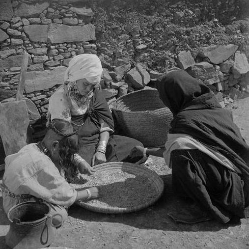 Taghjicht/ Femmes des Ouaouzguite portant, pour l'une, le marhma de cotonnade blanche, triant des graines